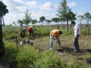 voluntariado_ambiental_2010